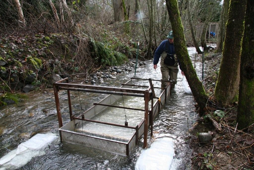 Installing_Kokanee_Trap_on_Lewis_Creek_042